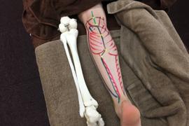 体表解剖②