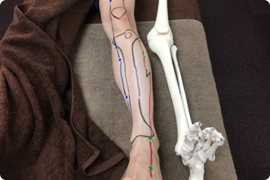 体表解剖③